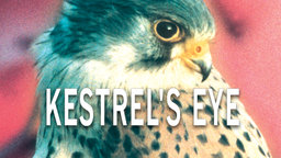 Kestrel's Eye - Life from a Bird's Perspective