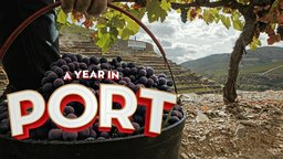 A Year in Port - Examining How Port Wine is Made in Portugal